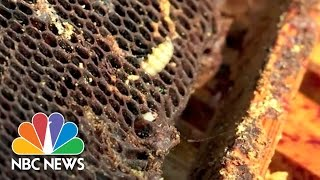 Plastic-Eating Worms Could Help Clean Up The Earth | NBC News