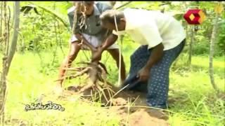 Bhoomigeetham | Vegetable Farming
