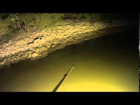 Bowfishing on Ohio River Summer of 2014