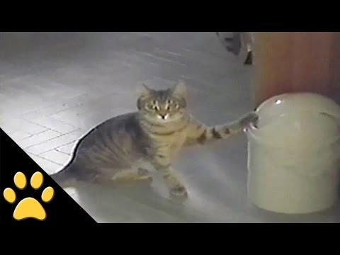 Thumbnail for Cat Video Cat Vs. Trashcan