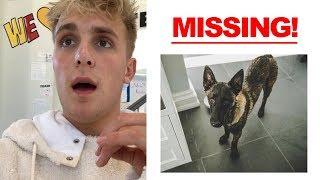 Apollo Went Missing.. PLS HELP!!