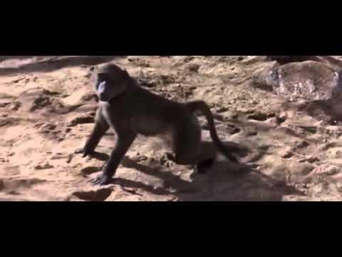 видео приколы пьяные животные