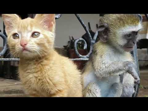 Rescued Baby Monkey Meets Two Kittens And They Couldn't Be Happier