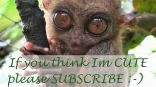 Bohol Philippines Travel Tourism - White Sand Beaches - Tarsier Primate - Welcome Video