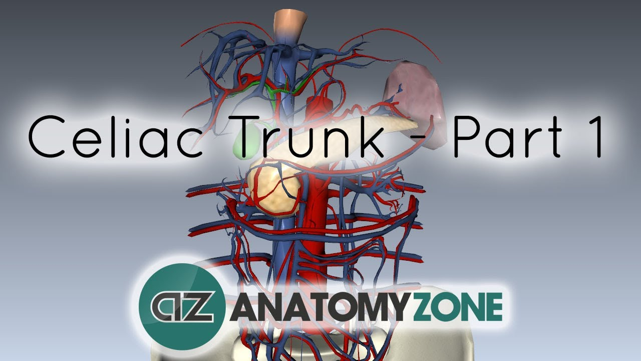 Celiac Arterytrunk Part 1 Anatomy Tutorial Youtube