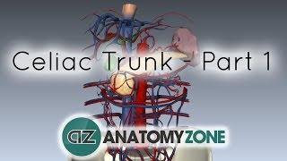 http://www.anatomyzone.com 3D anatomy tutorial on using the branche...