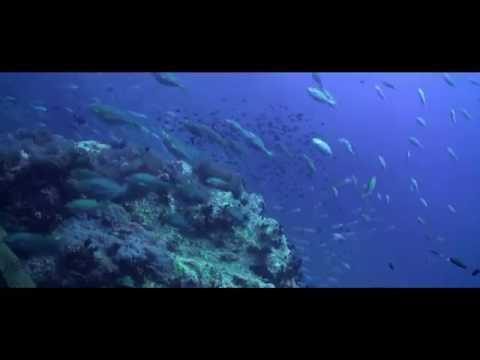 Underwater Documentary - Adaptations of Marine Animals (Koh Tao, Thailand)
