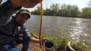 Pesca de Mojarras Grandes en Río con Anzuelo - Pesca con Línea de Mano