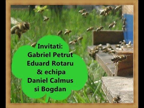 LA START IN APICULTURA - LIVE 6 - Importanta materialului genetic