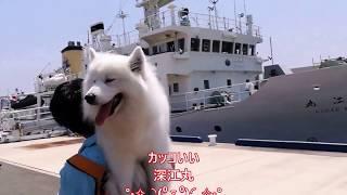 神戸商船大学深江祭に遊びに来たよ(^^♪楽しいステージ、ステキなお船を...