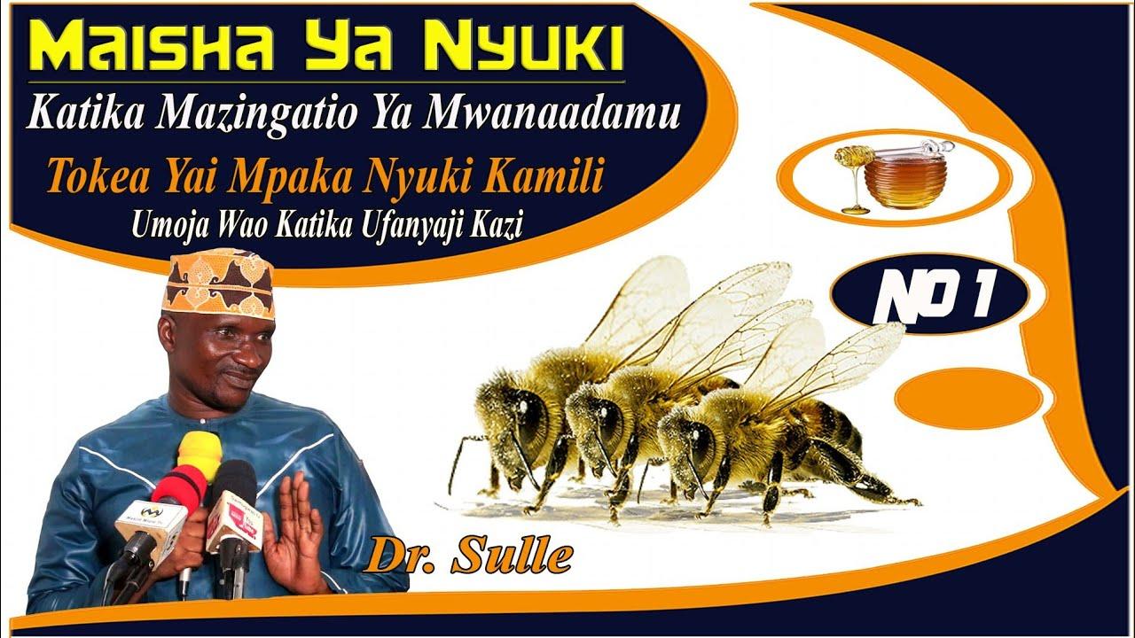 Download DR. SULLE   MAISHA YA NYUKI  KATIKA MAZINGATIO YA MWANAADAMU NO 1   TOKEA YAI MPAKA NYUKI KAMILI