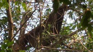 hành trình xuyên rừng già tìm mật ong