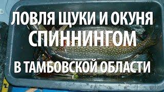 Ловля щуки на лягушку в Тамбовской области