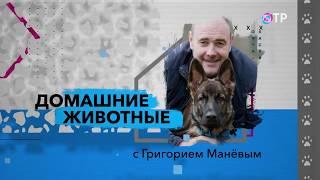 Питомник Хтон на TV. Часть 4-Ориентальные кошки