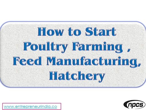 How to Start Poultry Farming, Feed Manufacturing, Hatchery