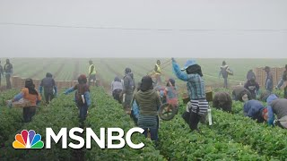 'What's Eating America' Examines Immigration Via Lens Of Food | MSNBC