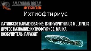 Паразитарные болезни аквариумных рыб