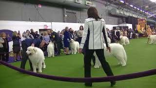 Great Pyrenees Westminster dog Show 2018 a