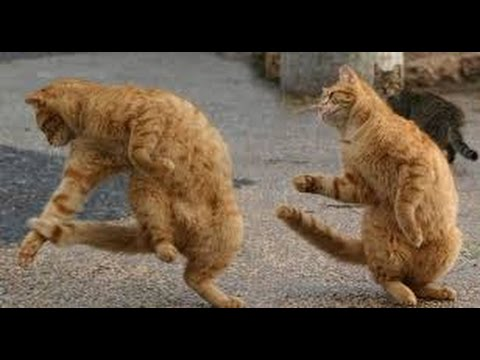 Funny animals dancing to hip hop Funny Franks Funny animals ...