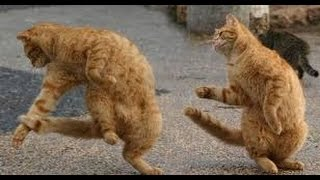 Funny animals dancing to hip hop   Funny Franks   Funny animals dancing to music
