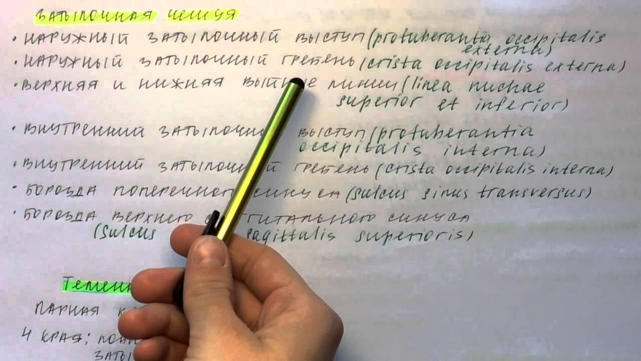 Свод Черепной
