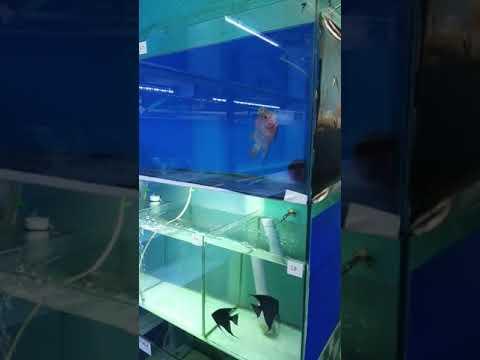 Fish Room | Angel Fish Breeding Section