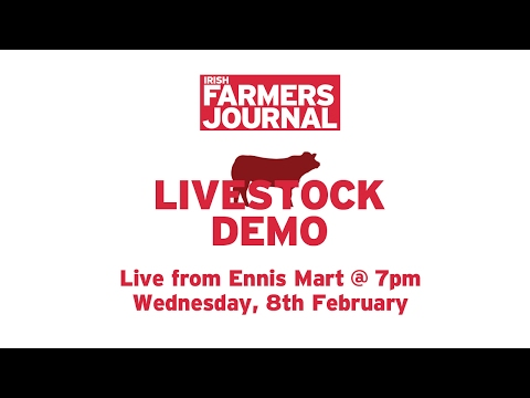 Livestock Demo Ennis Mart 2017