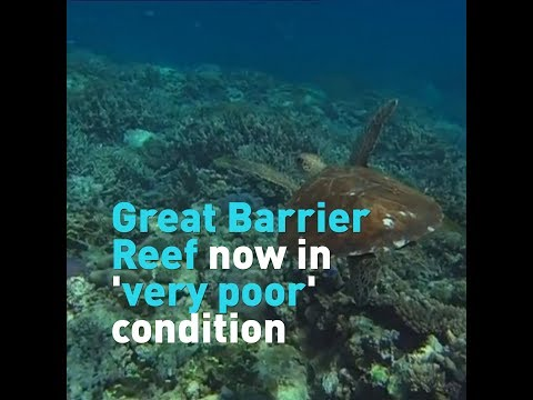 Great Barrier Reef now in 'very poor' condition