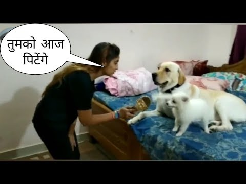 Tik Tok on all cute and talented dog ? || funny || by Shaqib