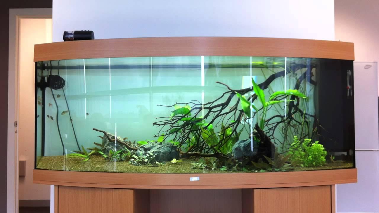 Juwel aquarium fish tank - Juwel Vision 450 Aquarium Update 4 12 11