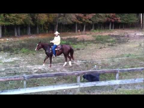 Chip Land Performance Horses Futurity Prospect Grandson of Boonlight Dancer For Sale - Part 1