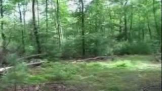 Walker Lumber Co