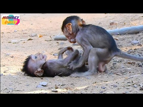 Much happy Barbi baby play free style adorable |Blacky let baby out of chest ever |Monkey Daily 2648