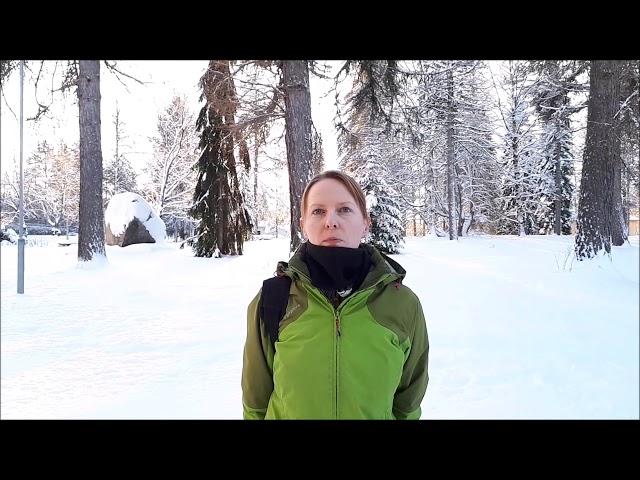 Haastattelussa metsätalousinsinööri 1