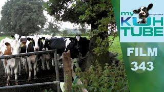 Donnerwetter - so kuh-l sind Kühe - KuhTube Film 343