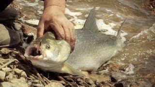 [Школа рыболова] - Ловля жереха в Казахстане