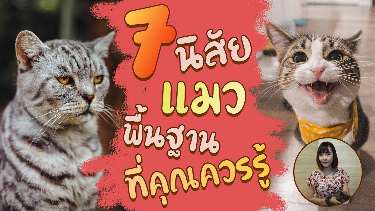 7 นิสัยแมวพื้นฐานที่คุณควรรู้  :EP22