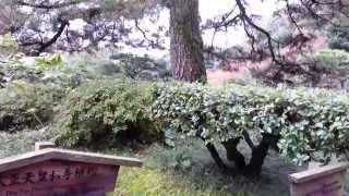 癒し動画:Healing Video☆大正天皇お手植松:Emperor Taisho your hand ...