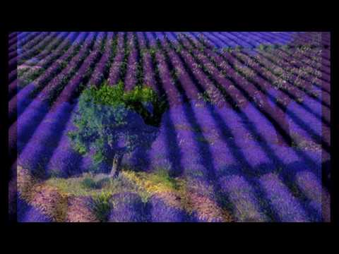 Lavender Blue by Robin Spielberg (Relaxing Music) HD