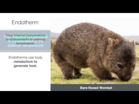 Ectotherms & Endotherms [HSC Biology[