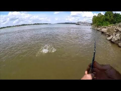 White Bass On A Scotta By Goture