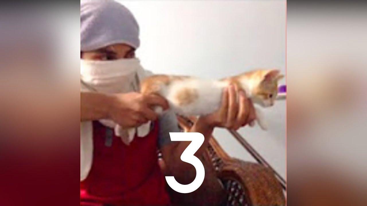 تحدى الضحك اذا استطعت مع اروع مقاطع ومقالب القطط 😹😹  ~ قطط مضحكه جدا ~ فيديو مضحك