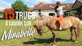 ~ 15 TRUCS À SAVOIR sur Mirabelle ! 🐹 ❤ ~