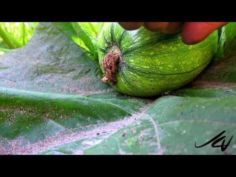 Kelowna's Top Garden - British Columbia Gardening 2016 -   Fruit and Vegetable -  YouTube