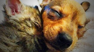 Cute Puppies and Kittens Together 🐱🐶 Funny Cats and Dogs Playing (Full) [Funny Pets]