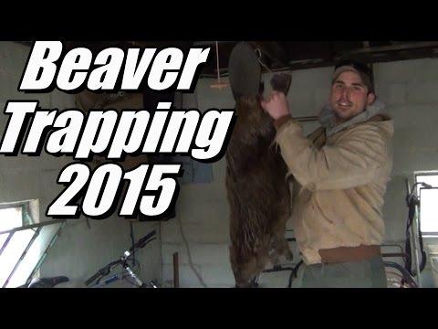 Beaver Trapping 2015 - Hunter