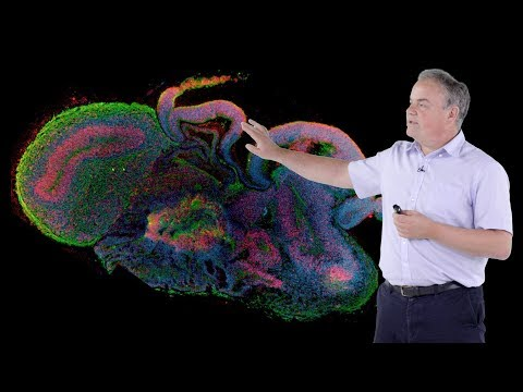 Jurgen Knoblich (IMBA) 2: Modeling Human Brain Development in 3D Organoid Culture