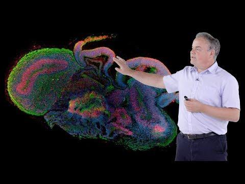 Jurgen Knoblich (IMBA) 2: Modeling Human Brain Development In 3D Organoid Culture