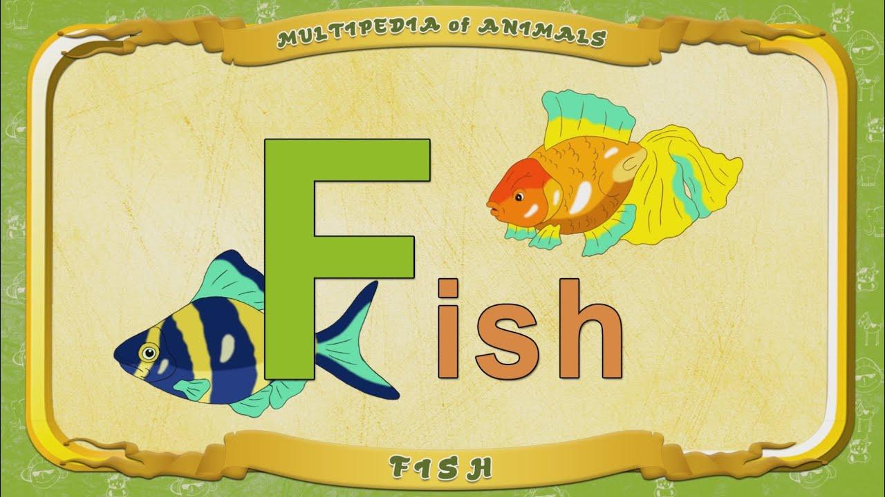 Multipedia of Animals Letter F Fish