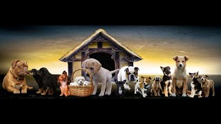Odgłosy zwierząt dla dzieci - czy wiesz jakie dźwięki wydają zwierzęta